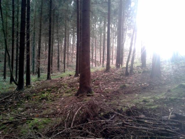 Contact avec un Esprit de la Nature (6)
